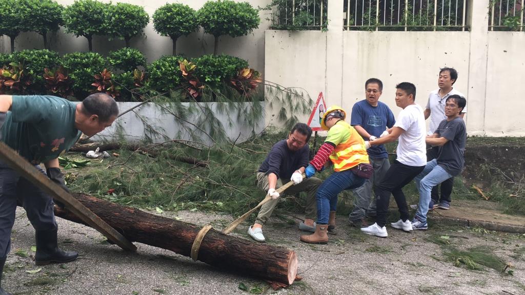 颱風過後,校長和老師們一起清理塌樹